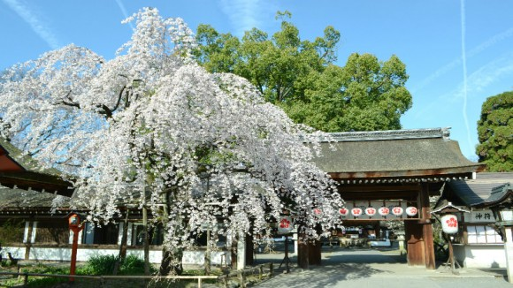 Okasai ( Hirano Shrine) Appearance Photo