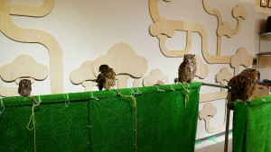 Owl Family Kyoto Appearance Photo