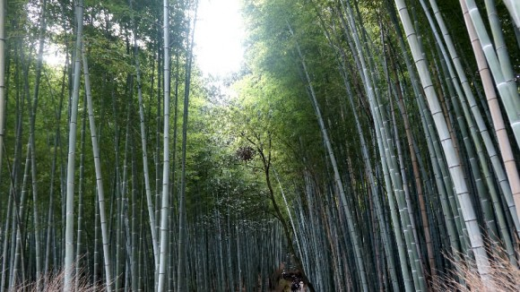 Arashiyama Bamboo Grove Appearance photo