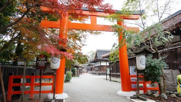 Mitarashi Matsuri Appearance Photo