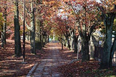 Strolling like a local ― Okazaki and Nanzen-ji temple