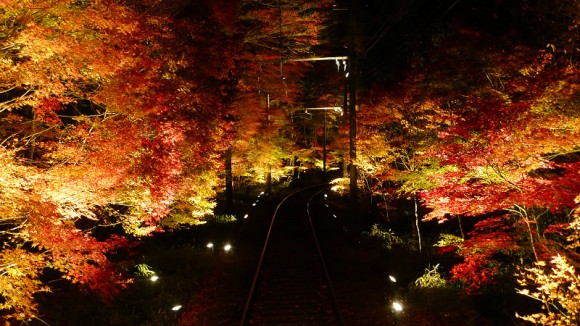 The light up of Momiji Leaf Tunnel