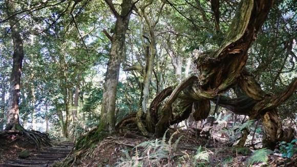 Mt. Kurama Main