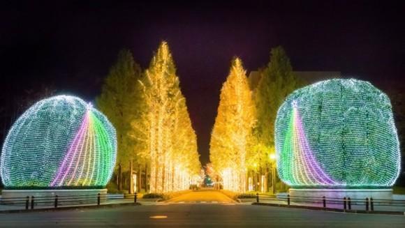 The Yamamomo Trees